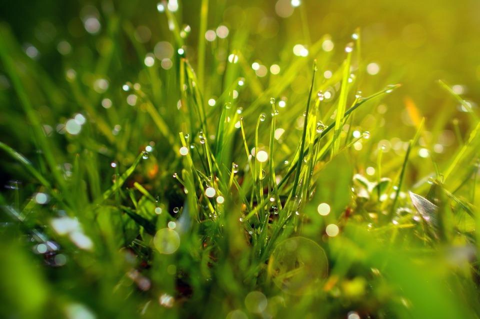 grass-3199370_1280